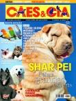 Edição 313 - Junho/2005