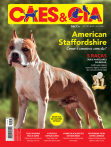Edição 487 - American Staffordshire